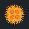 Sunny Side Sunflower