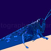10. Blue Grasshopper