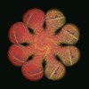 362. Allium Wheel