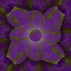 Corporeal Flower Purple