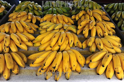 BRASIL 2012-07-22 ALIMENTACAO - BANANAS EM FEIRA LIVRE . / Brasilien , Bananen. Früchte. © Lucas Lacaz Ruiz/LATINPHOTO.org