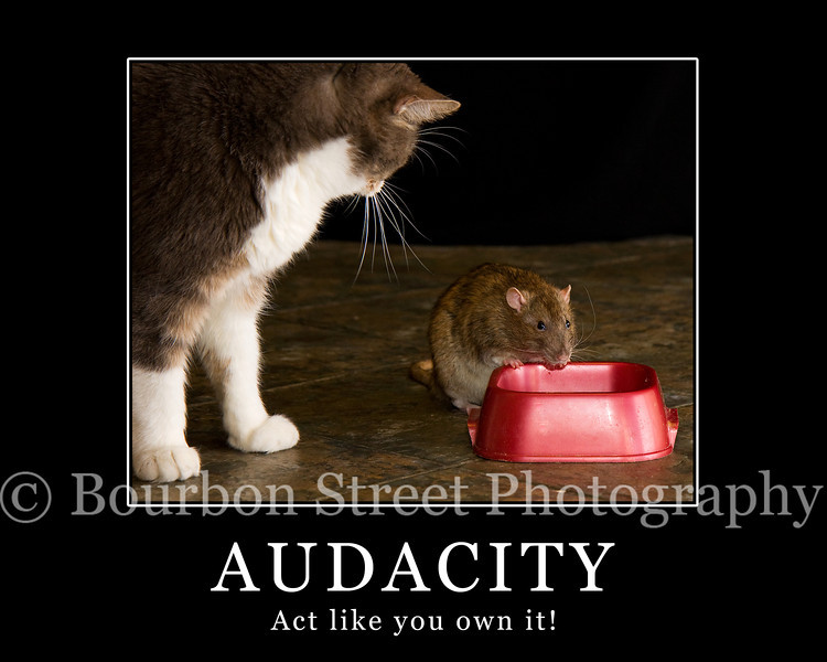 "<div style=""font-size:18px;"">Audacity Motivational Poster</div>"