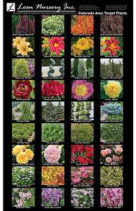 Colorado Area Target Plants Poster