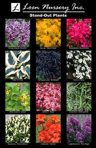 Stand-Out Plants Poster - Copy