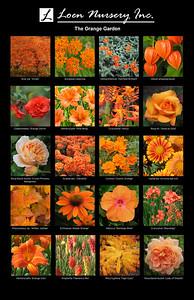 The Orange Garden Poster
