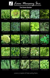 The Green Garden Poster