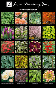 The Perfect Garden Poster 2