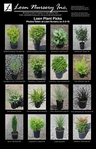Loen Plant Picks Poster
