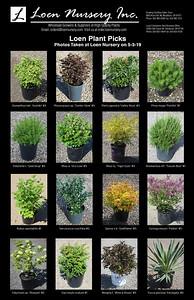 Loen Plant Picks Poster2