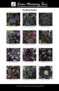 Black Garden Poster