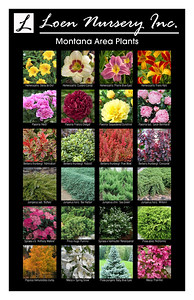 Montana Plant Poster SMUGMUG