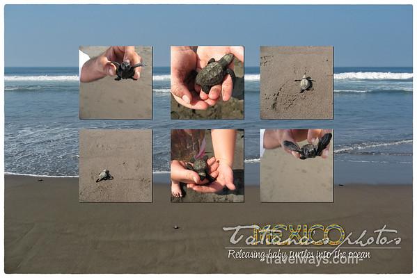 el-tortugario-sea-turtle-sancturary-cuyutlan-postcard
