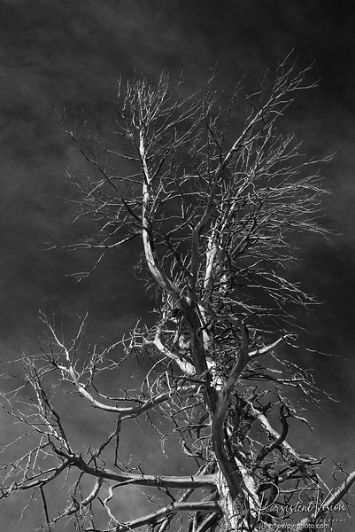 Dead Tree and Sky