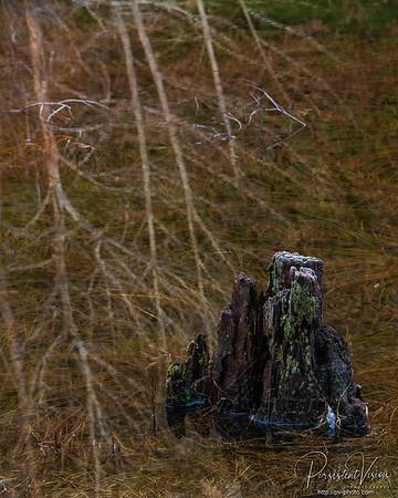 Stump and trees