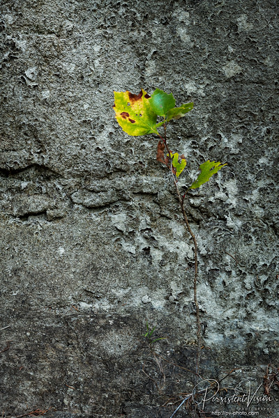 Fall Color and Rock