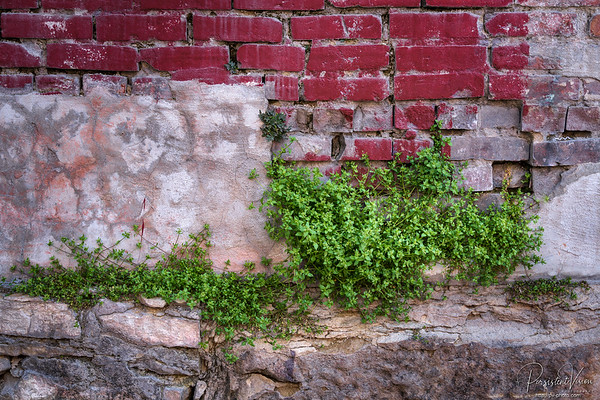 Plants Growing in Brick Wall