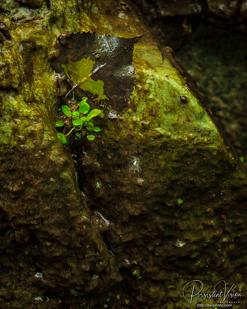 New life clinging to the wet rocks