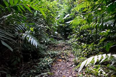 Trail to Kakau Cabinas