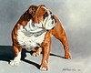 Ch. Lorelu Bruce's I'm Better-N-Sex - BOS at BCA 1990 and 1994<br /> <br /> in the collection of Bulldog Club of America<br /> <br /> This is my favorite painting in the collection.