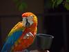 Parrot Adoption in Balboa Park