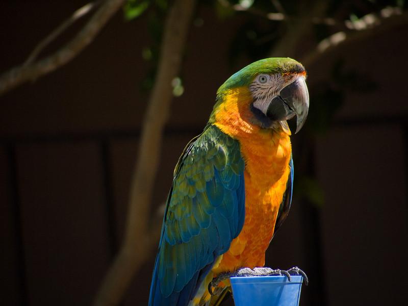 Balboa Park Parrot Adoption 2