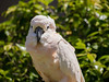 Balboa Park Parrot Adoption 3