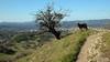 Swissy on Shell Ridge