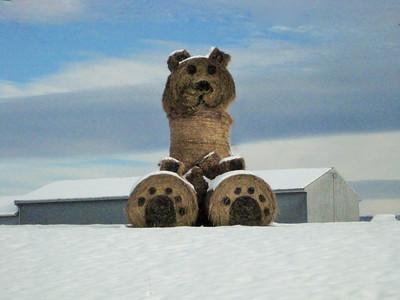 Hay Bear !