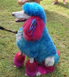 Blue Dog dog