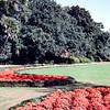 Great Lawn, Bellingreth Gardens, Mobile, AL - Trip to Southeast, December 1975