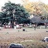 Colonial Park Cemetery, Savannah, GA - Trip to Southeast, December 1975