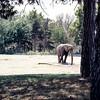 Henry Doorly Zoo, Omaha, NE, June 1976