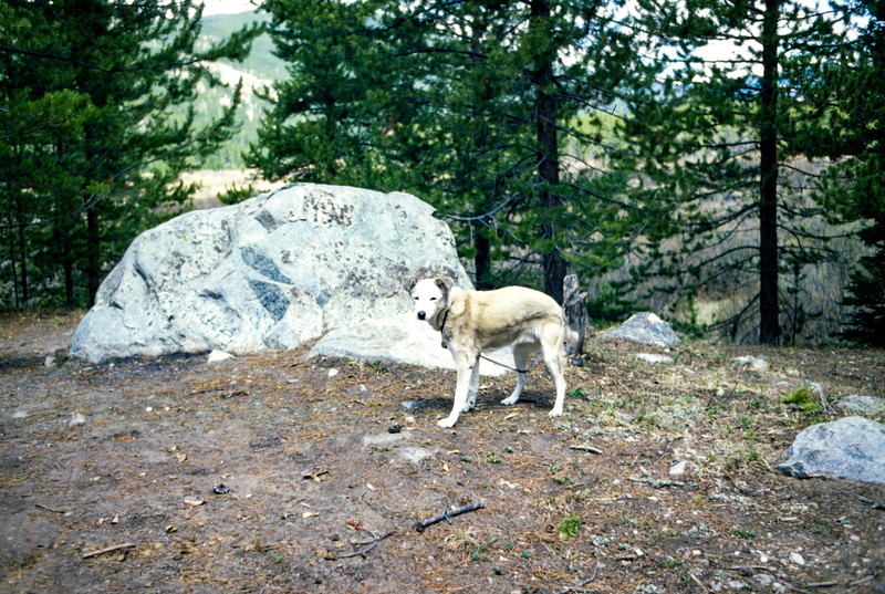 Muffie, Rocky Mountain NP. Trip to Estes Park, CO, June 1979