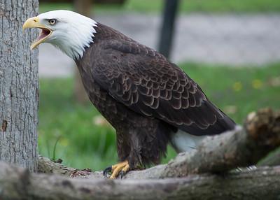 Potter's Park Zoo (Lansing)-8688