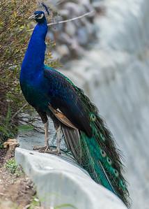 Potter's Park Zoo (Lansing)-9157