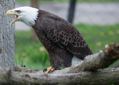 Potter's Park Zoo (Lansing)-8679