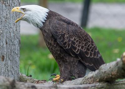 Potter's Park Zoo (Lansing)-8675
