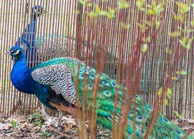 Potter's Park Zoo (Lansing)-9053