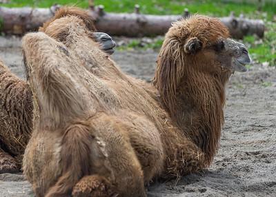 Potter's Park Zoo (Lansing)-8840