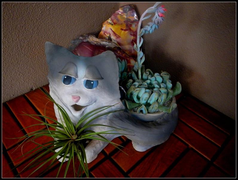 Kitty planter