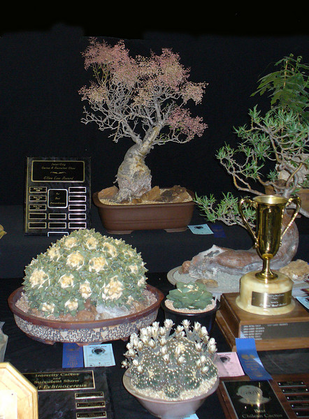 Close up of trophy table