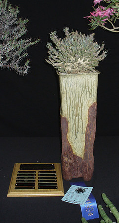 Euphorbia Namibensis shown by Petra Crist