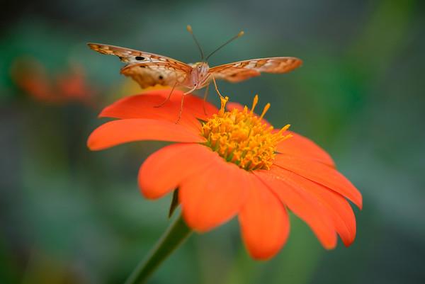 Powell Garden Butterflies