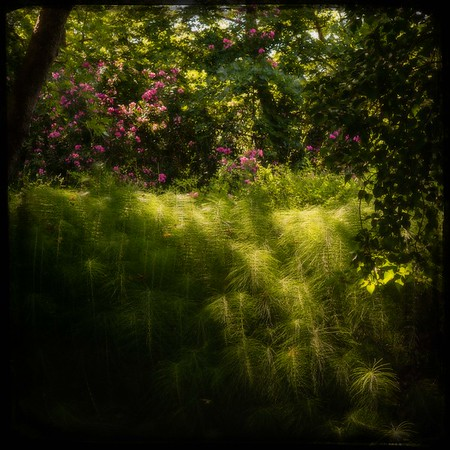 Flowering Eden