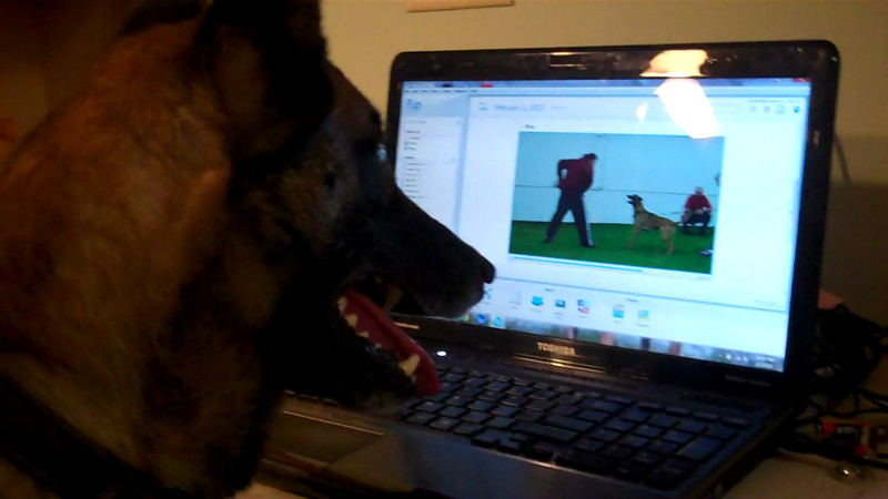 Nix watching Broc