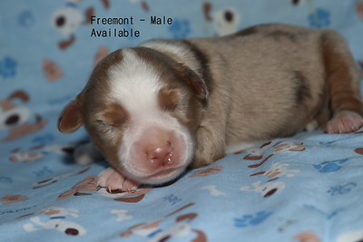 this pup has been reserved as of 2/10/18
