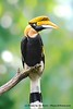 The Towering Toucan