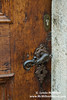 Sea Horse Door Handle