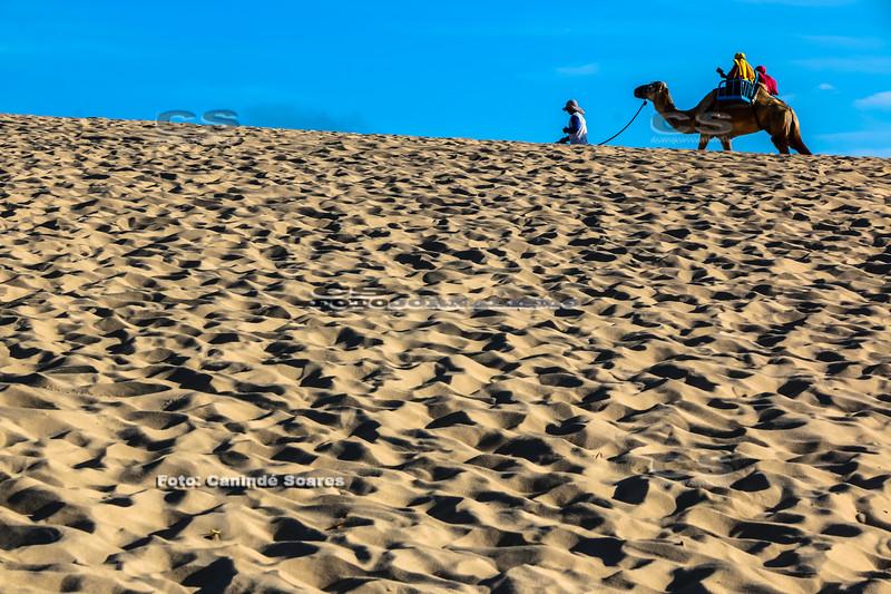 Dromedário na praia de Jenipabu