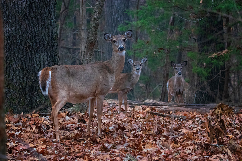 11.27.19 - Prairie Creek Park:  Quick pic of a mom with kids.